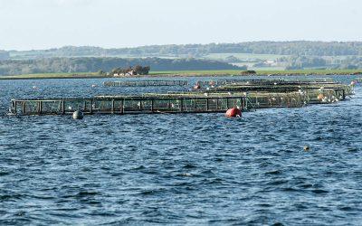 Havbrug mister miljøgodkendelsen